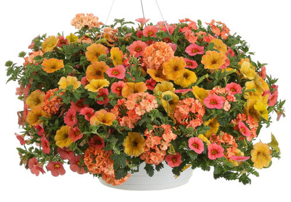 Beach Sunset Combo Hanging Basket **MOTHER'S DAY RELEASE**