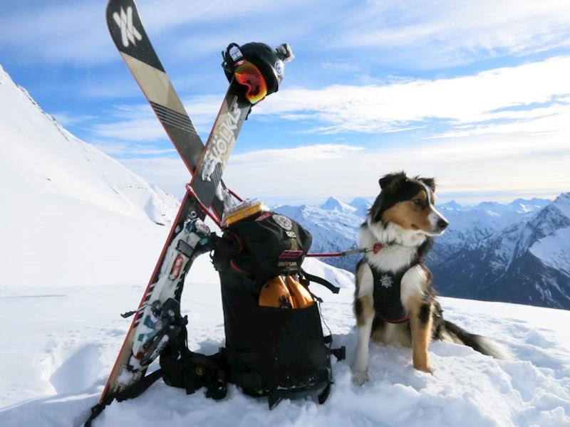Aspiring Avalanche Dogs