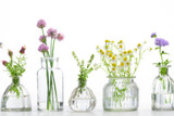 Create Your Own Home Apothecary: Botanicals for Your Holistic Health & Wellbeing