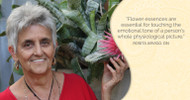 The Healing Power of Flower Essences to Support Women's Health
