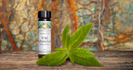 The Power of Lemon-Scented Essential Oils