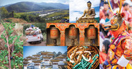 Bhutan Himalayan Juniper Essential Oil:  A Sustainable, Multi-faceted, Therapeutic Botanical