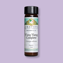 Alluring Ylang-Ylang Essential Oil from Madagascar