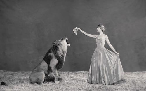 Lion Tamer 1
