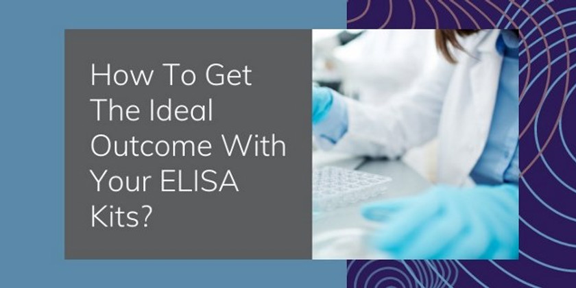 How To Get The Ideal Outcome With Your ELISA Kits?