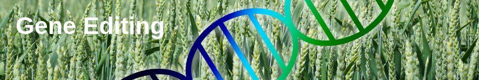 gene-editing.jpg
