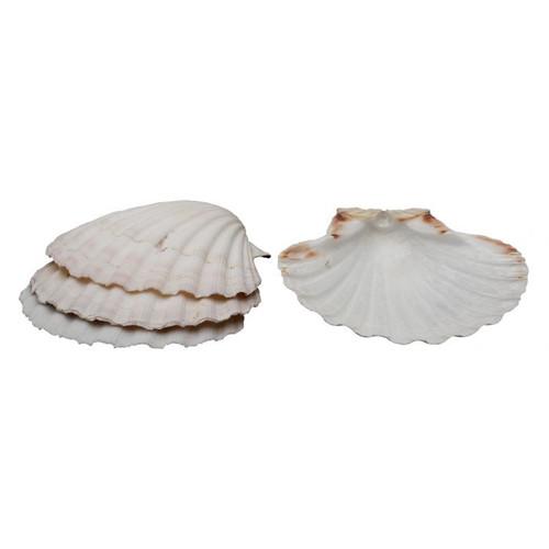 Baking Shells set/4