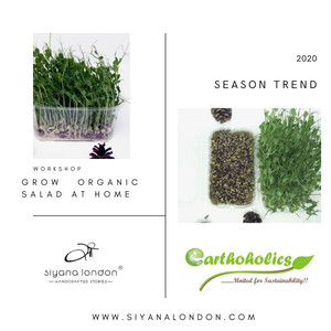 How to grow Microgreens at home?