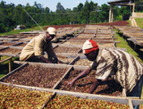 About the Sidama Coffee Growing Region