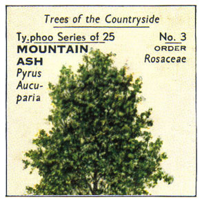 Typhoo Tea Cards - Trees of the Countryside