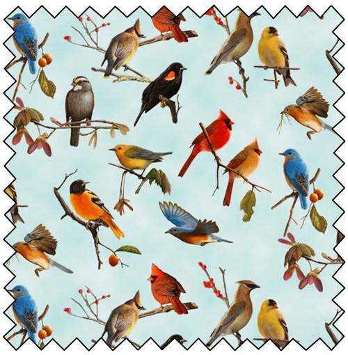 Songbirds - BLUE