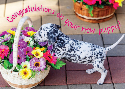 Glory To Dog Congratulations on Your New Puppy Greeting Card