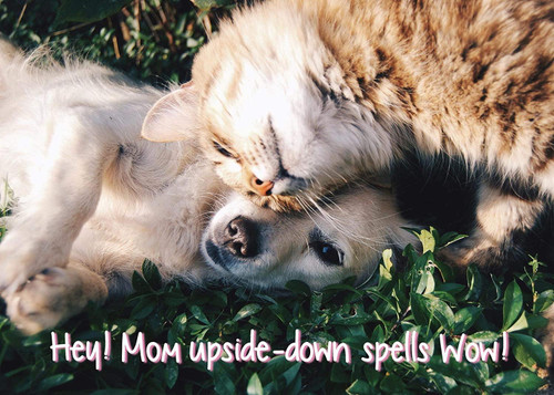 Glory To Dog Hey! Mom Upside-down Spells Wow! Mother's Day Greeting Card