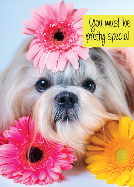 You Must Be Pretty Special Birthday Greeting Card