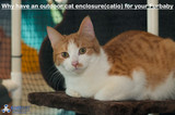 Why have a cat enclosure for your little friend?