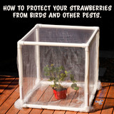 How to easily protect your strawberries from birds and other pests in 2019.