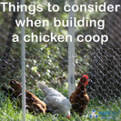 Things to consider when building a DIY Backyard Chicken Coop