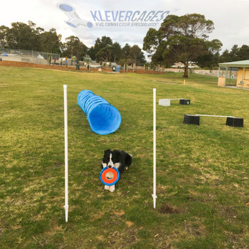 Collie waiting patiently on the grass with a frisbee in mouth between two Klever Cages dog agility weave poles built with PVC pipe and caps for a dog agility course