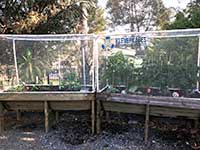 bird-netting-covering-a-pvc-frame-made-with-pvc-connectors-and-pipe-from-klever-cages-on-a-raised-garden-bed. Great protection for your garden and easy to design and build as your next PVC project.