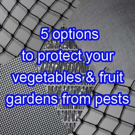 5 different options to protect your fruit and vegetables &fruit gardens from pests
