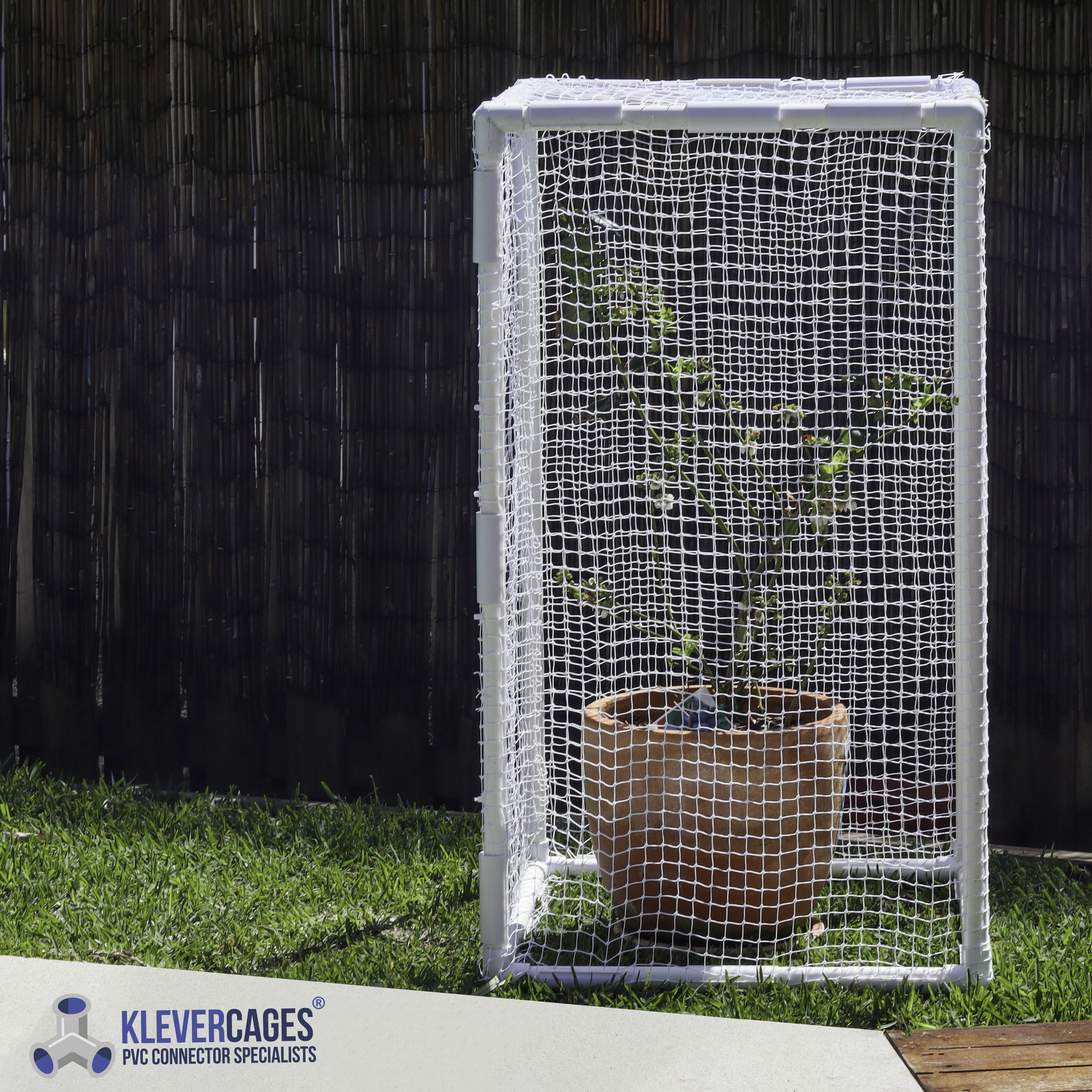 Blueberry bush in a terracotta pot being protected with white bird netting supported by PVC pipe and 3 way elbow connectors from Klever Cages