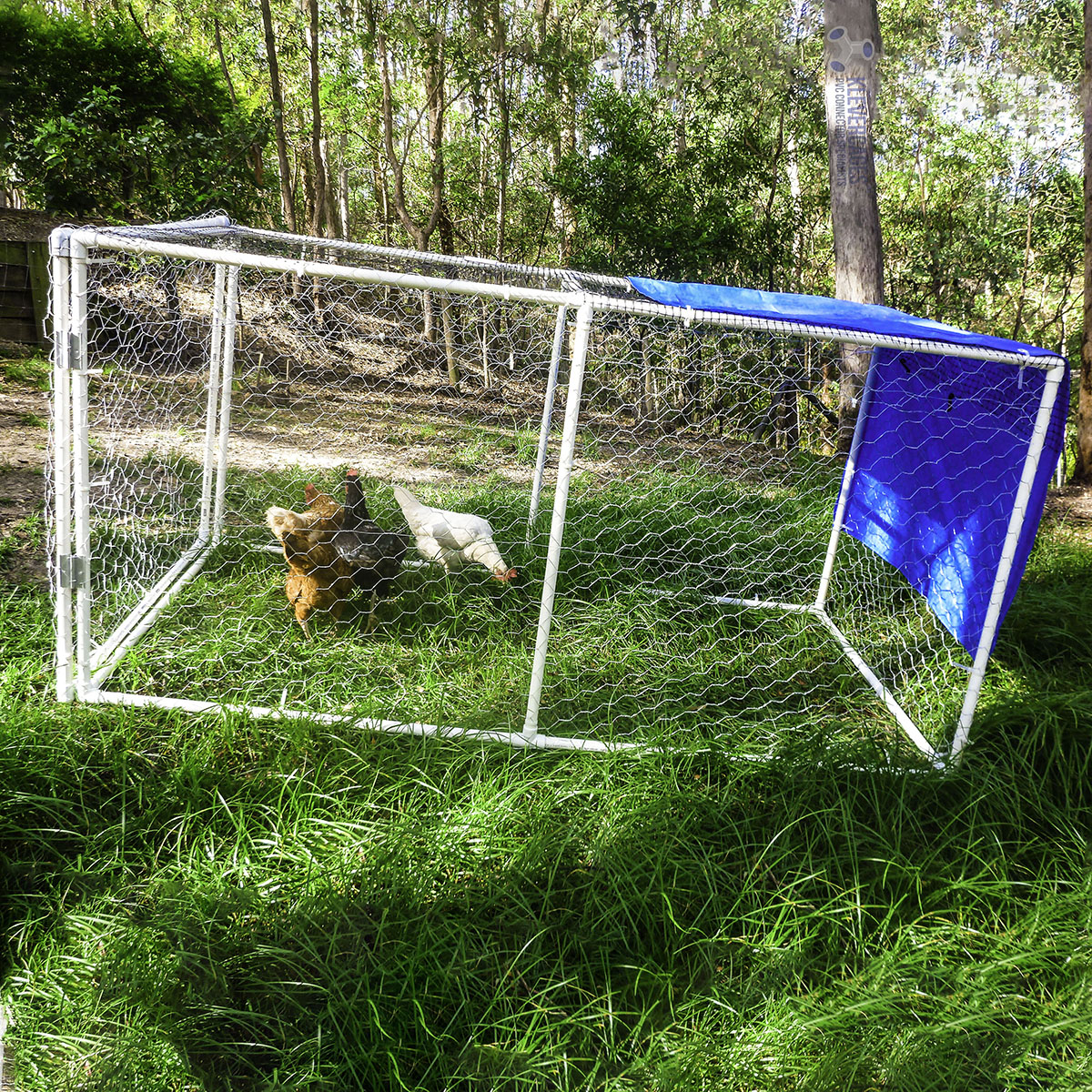 3 chickens enjoying long green grass while being safe and protected in a mobile chicken coop with a tarp as a cover for shelter