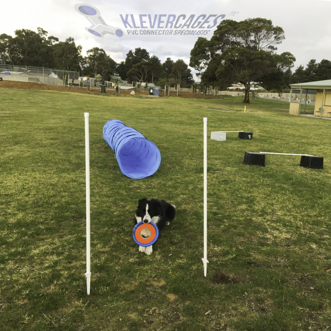 collie dog in park on green grass with a Frisbee and weave poles built from pvc-connectors-and-pipe from Klever cages Australia
