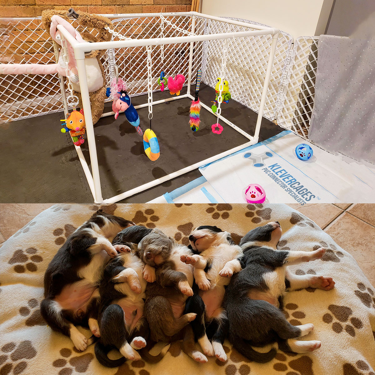 Cute puppies sleeping after playing with their dog toys hanging on plastic chains from a white PVC connector and pipe frame from Klever Cages