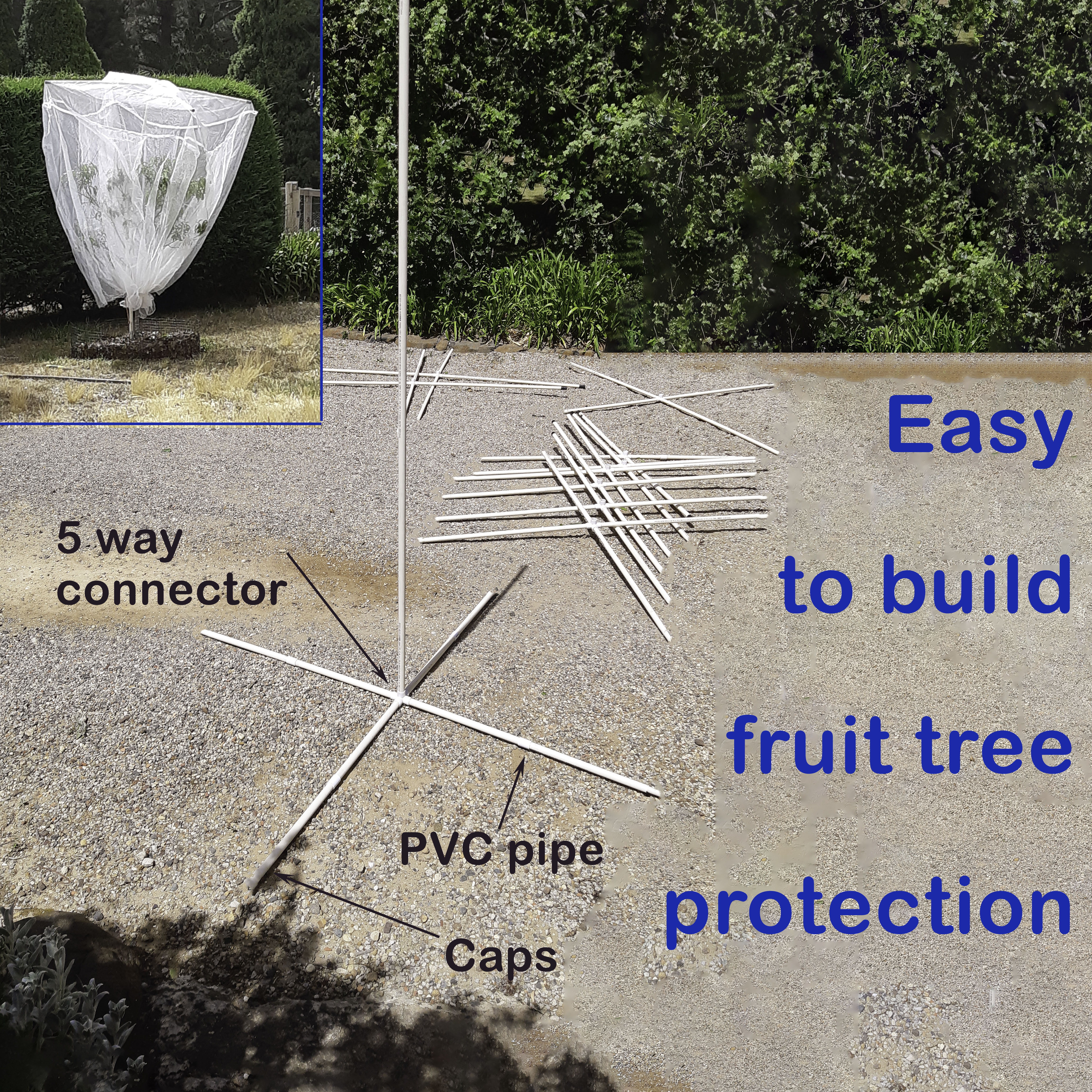 Fruit tree protection frame built with a 5 way connector fitting caps and PVC pipe supporting bird exclusion netting to keep the fruit safe