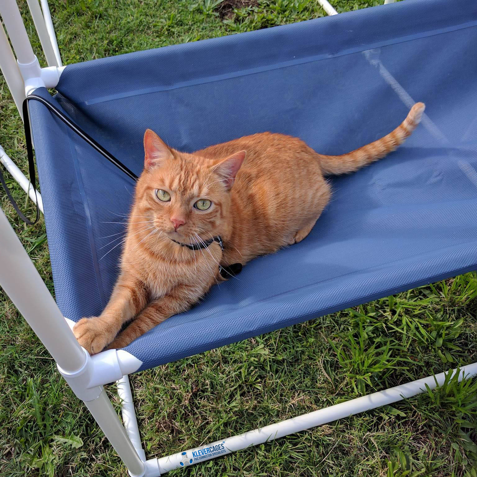 Ginger cat on a lead sitting on a hammock in the sun while the cat enclosure is being built