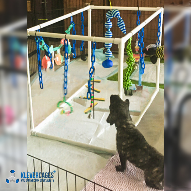 Puppy play cube gym with dog toys built with PVC pipe and connector fittings from Klever Cages