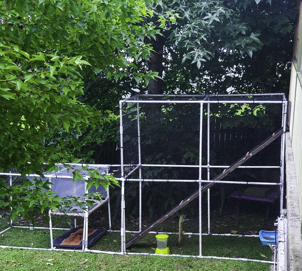 Outdoor DIY cat enclosure built from PVC connectors and pipe from Klever Cages. The cat enclosure is next to the white wall shaded by some trees on the grass. It is equipped with a bed, food, water a walkway and some cat toys.