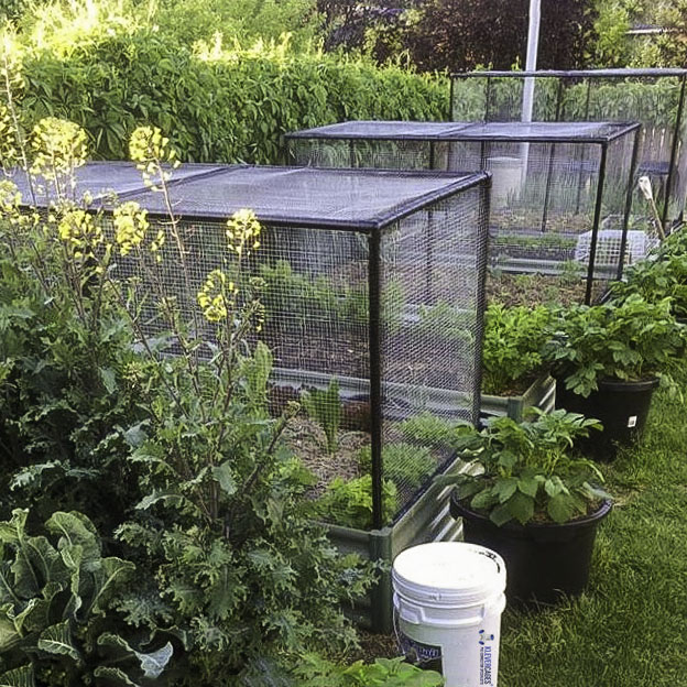 raised-garden-bed-lettuce-and-other-vegetables-protected-with-bird-exclusion-netting-supported-with-black-pvc-pipe-and-connectors-from-klever-cages.jpg