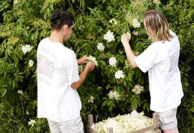 We Plant and Grow our Own Ingredients for Botanicus Skincare