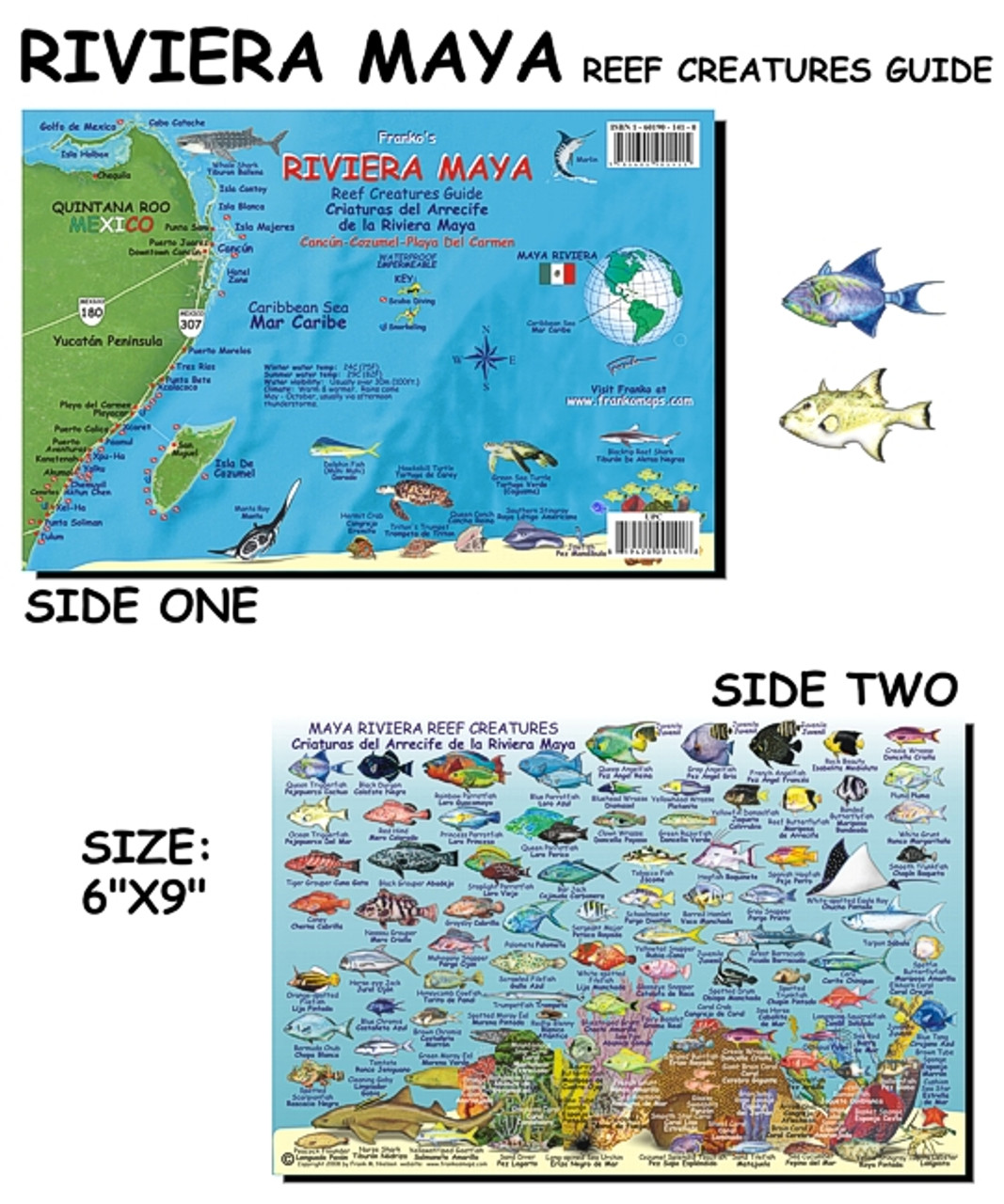 Mayan Riviera - Fish Card| Scuba Gear Canada on