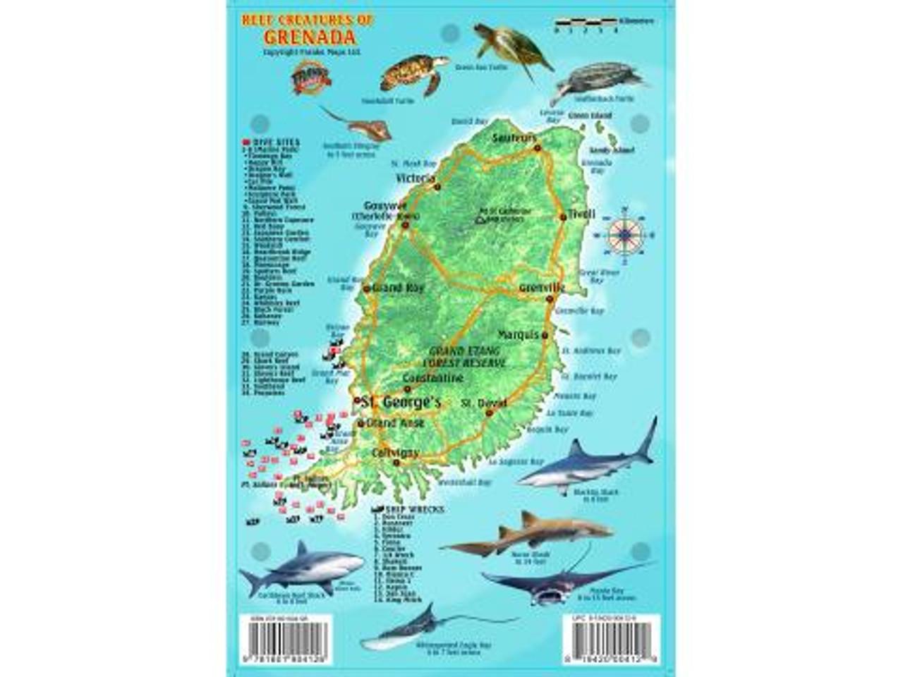 Barbados Dive Map /& Reef Creatures Guide Waterproof Fish Card Franko Maps