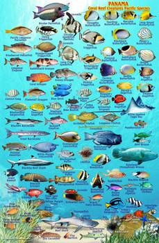 Waterproof Fish ID Card - Panama Pacific