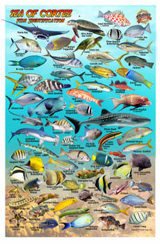 Baja & Sea of Cortez fish ID