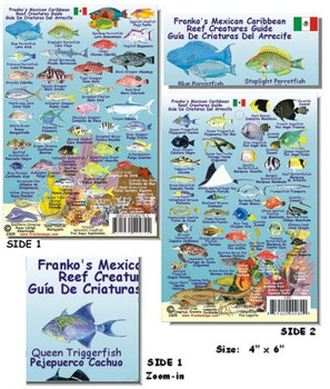 Waterproof Fish ID Card - Mexican Caribbean