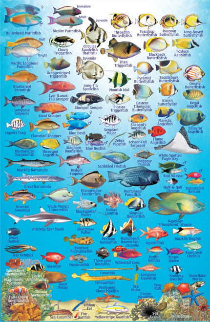 Fish ID Card Philippines