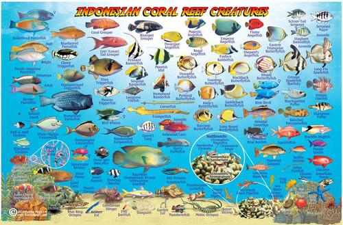Fish ID Card Bali