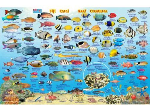 Waterproof fish ID card for Fiji