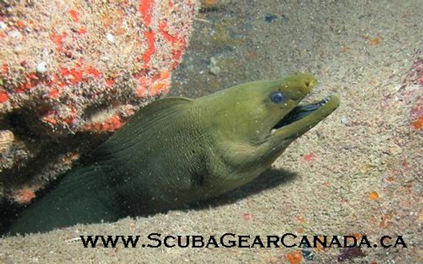 Luggage Tag - Moray Eel