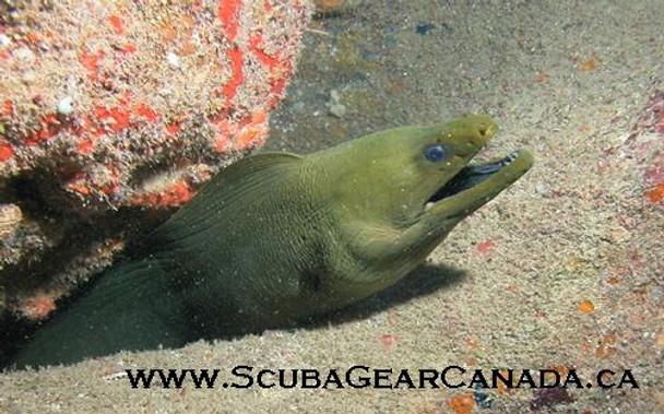 Luggage Tag - Moray Eel