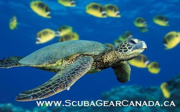 Luggage Tag - Turtle 1