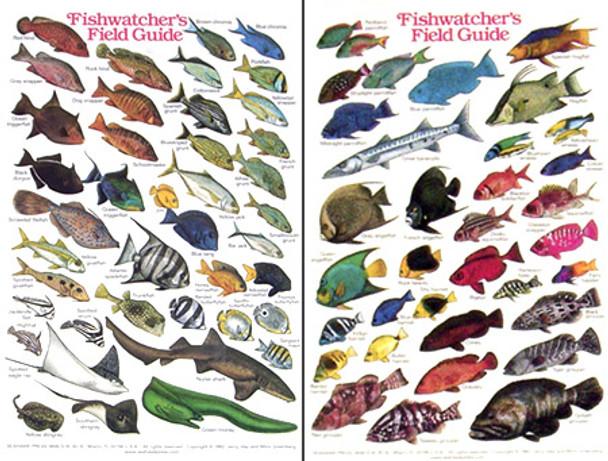 Waterproof Fish ID Card