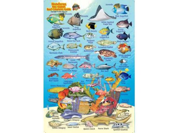 Waterproof Fish ID Card - Honduras