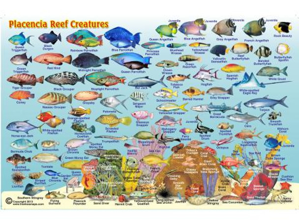 Waterproof Fish ID Card & Map - Belize - Placencia