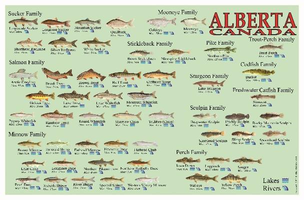 Alberta Fish Identification Waterproof Card