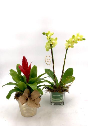 Albuquerque Florist Signature Collection- Exotic Plants